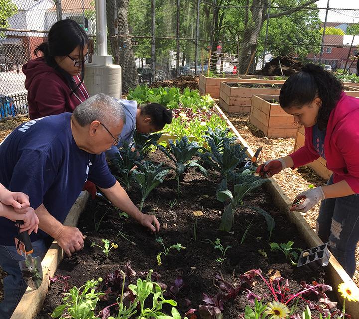 The New York Botanical Garden: Beauty builds community
