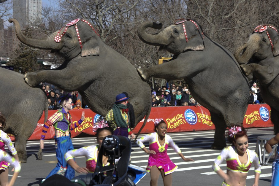 """Elephants perform underneath the Brooklyn Bridge as they march into Brooklyn for the Ringling Bros. and Barnum & Bailey Circus, where the 143rd iteration of """"the Greatest Show on Earth"""" will be performed at the Barclays Center."""
