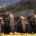 Platters of fruit are put down to feed the elephants as they march beneath the Brooklyn Bridge.