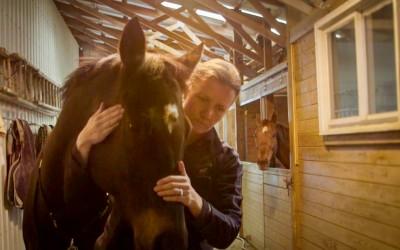The Horse Vet from Luke Tress.
