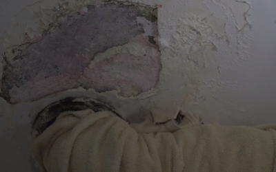 Feds Launch Investigation into Unsafe Living Conditions in NYCHA Housing by Nicole Ashley