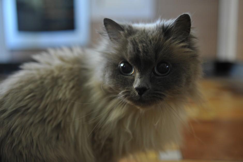 Katya's cat, Lili
