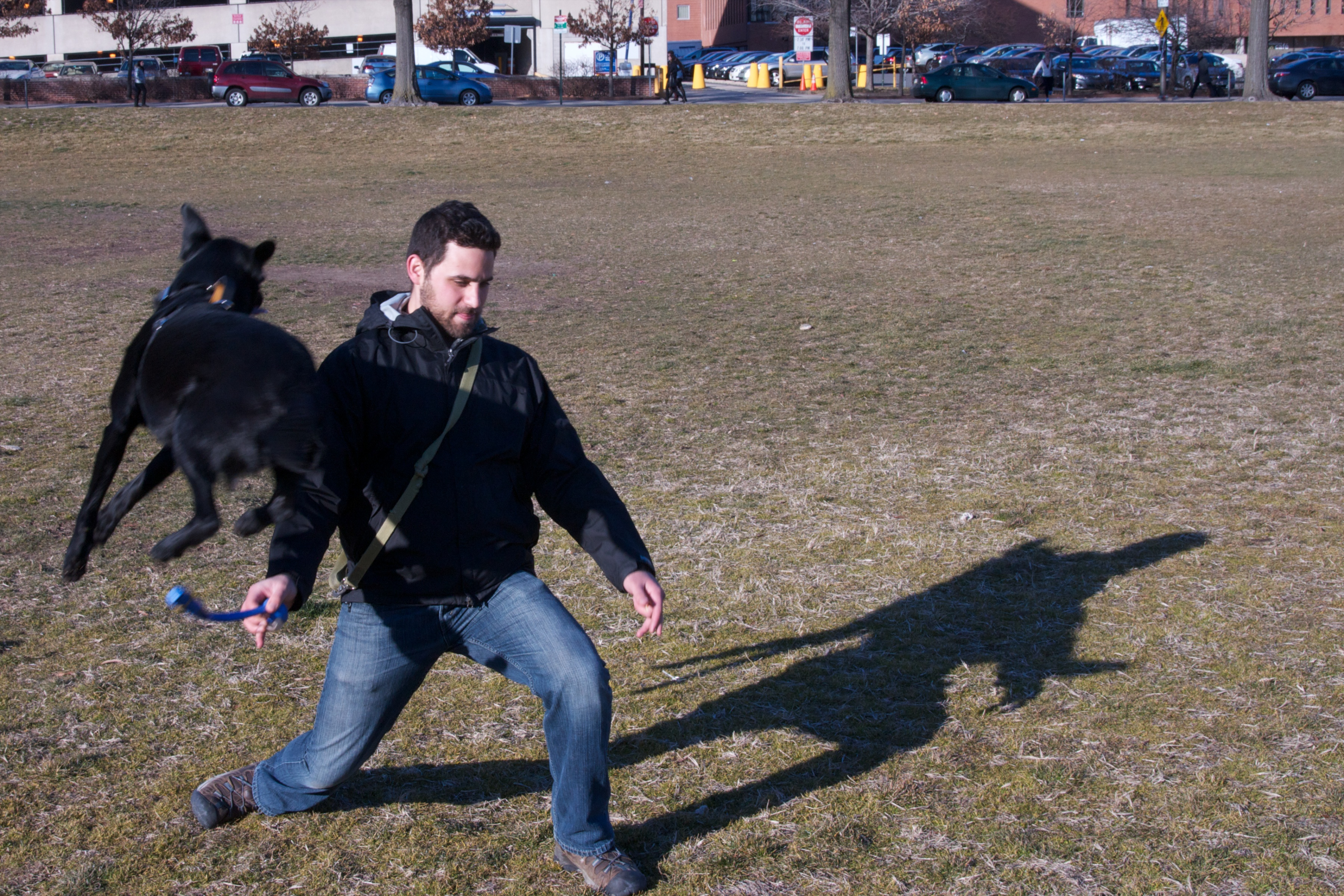 Four Steps to Easily Train Your Dog
