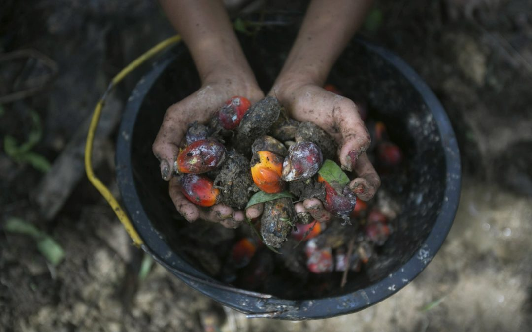 Palm oil labor abuses linked to world's top brands, banks