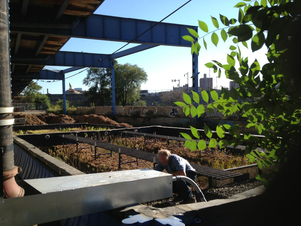 Scientist Paul Mankiewicz inspects his handiwork, a pop-up wetland at Pier 5.