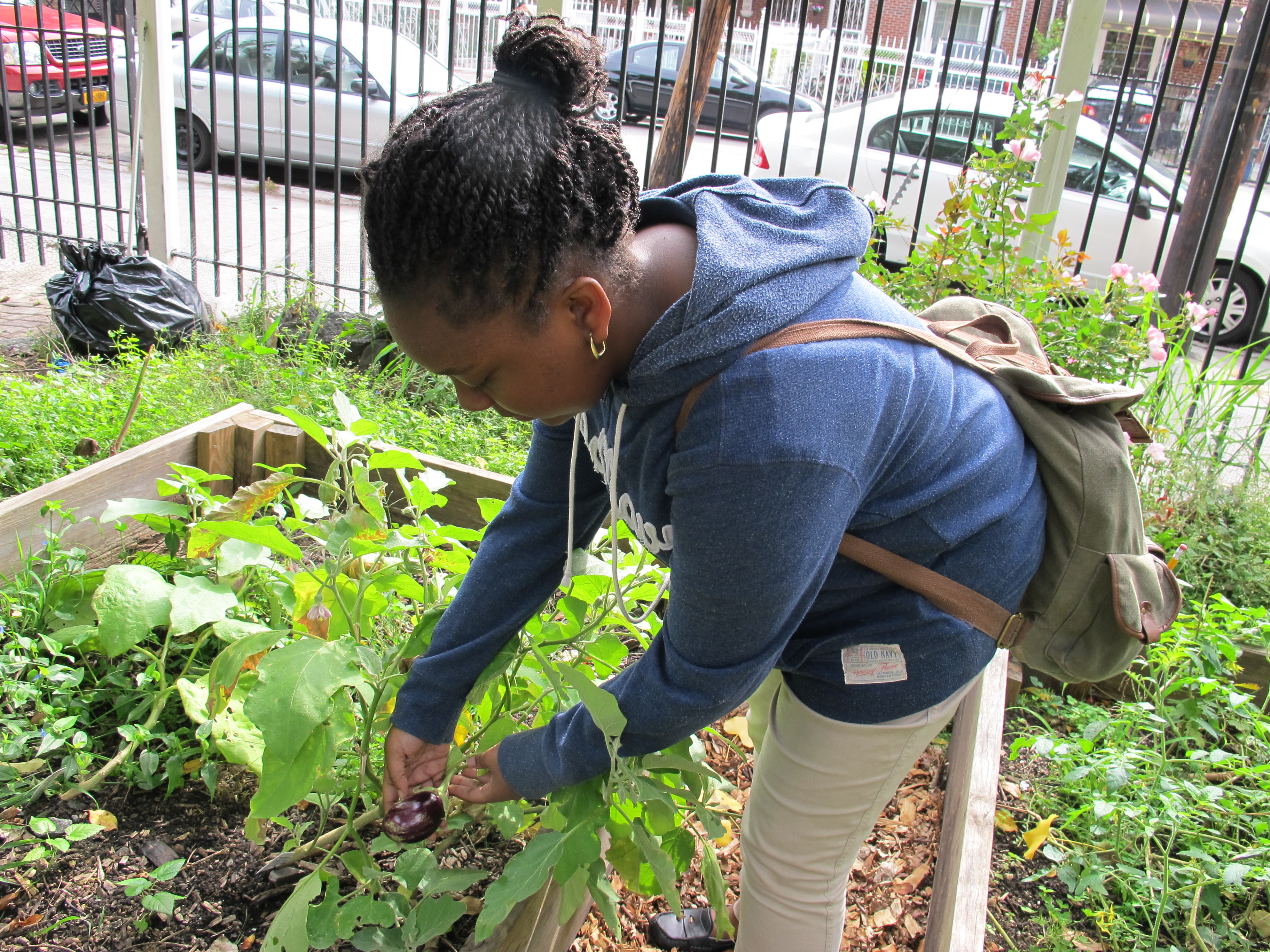 Jada Young, 12, shows off one of the eggplants she is growing in her box at Padre Plaza Community Garden.
