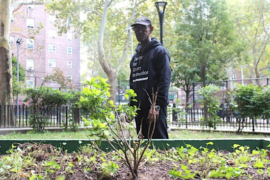 Patterson Houses anti-crime initiative puts faith in green spaces