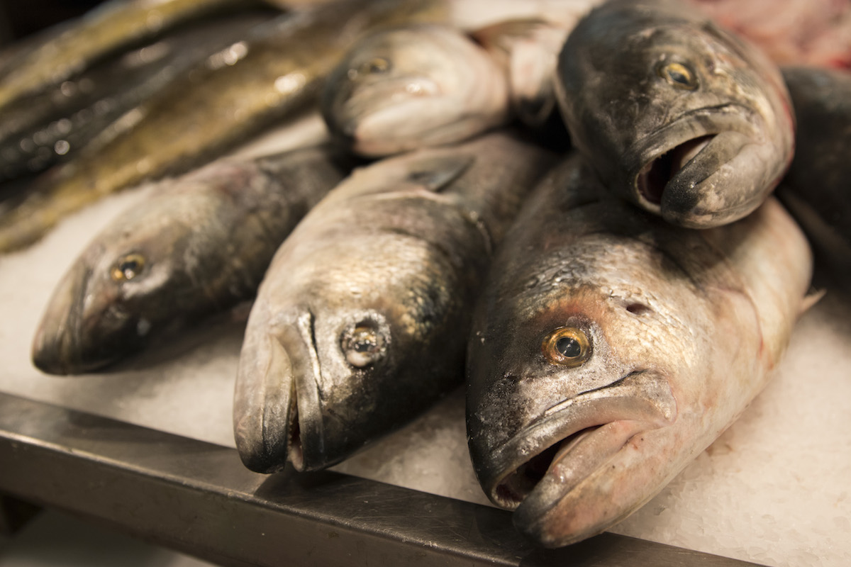 Whole fish wait to be sliced and packaged for sale at Blue Ribbon Fish Co. in the Hunts Point Fish Market (photo by Jessica Bal).
